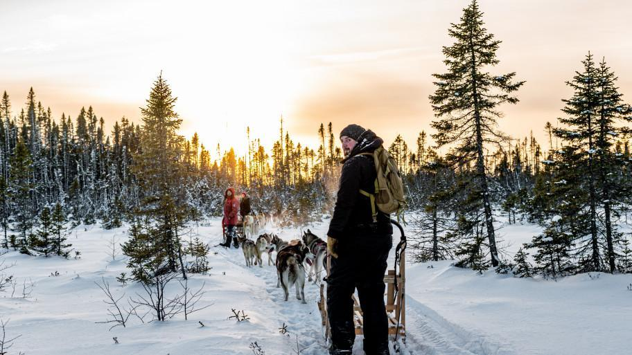 dogsledding with sunset
